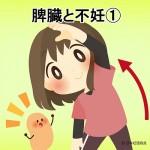脾臓と不妊①